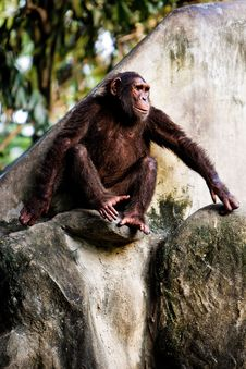 Free Monkey Royalty Free Stock Photo - 3656235