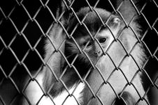 Free Sad Little Monkey Stock Images - 3656334