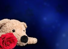 Free Bear With Rose Royalty Free Stock Photo - 3658195