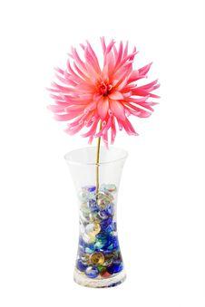 Free Pink Dahlia. Stock Photo - 3658700