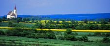 Free Rape Fields No.1 Royalty Free Stock Photography - 3658767