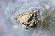Free Rock And Ice Detail Royalty Free Stock Image - 3659236