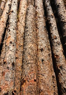 Free Stack Of Wood Stock Photos - 3659493