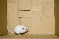 Free White Mice On Box Royalty Free Stock Photography - 3659837