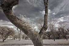 Free Infrared Photo – Tree, Skies And Flower Royalty Free Stock Photography - 3659877