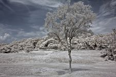 Free Infrared Photo – Tree, Skies And Flower Royalty Free Stock Photos - 3659878