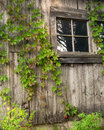 Free Vine Covered Barn Royalty Free Stock Photos - 36532878