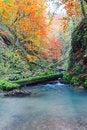 Free Galbena Canyon Autumn Stock Images - 36538114