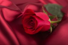 Free Red Rose Stock Photos - 36533623