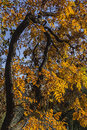 Free Autumn Colors - Different Shapes Royalty Free Stock Photo - 36549905