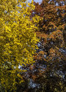 Free Autumn Patterns Royalty Free Stock Photo - 36549915
