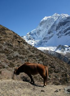 Free Red Horse In The Mountains Of Nepal Royalty Free Stock Images - 36542419