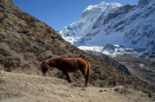 Free The Red Horse Is Grazing In The Mountains Of Nepal Stock Photos - 36542473