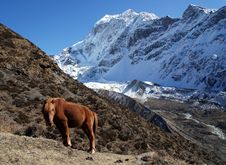 Free The Red Horse Is Grazing In The Mountains Of Nepal Royalty Free Stock Photography - 36542527