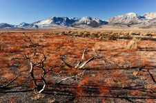 Free Dead Branches With A Road And Mountains Royalty Free Stock Image - 36544416