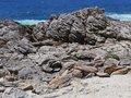 Free The South Coast Of Kangaroo Island Royalty Free Stock Images - 36551679