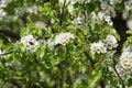 Free Springtime Trees Stock Photo - 36555400
