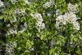Free Springtime Trees Royalty Free Stock Photography - 36555457