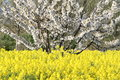 Free Springtime Fields Stock Photo - 36555850