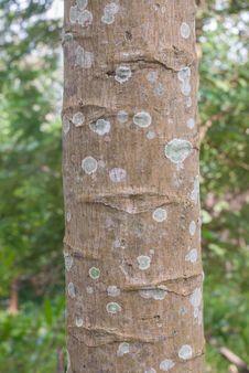 Papaya Tree Bark Stock Photo
