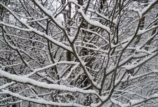 Free Trees With Snow Royalty Free Stock Images - 36557169