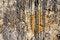 Free Sandstone Background Stock Images - 36558794