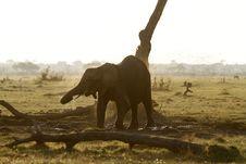 Free Baby Elephant Dust Bathing Stock Image - 36560911