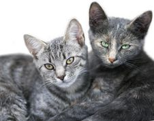 Free Two Cute Cats Portrait Royalty Free Stock Images - 36561159