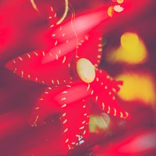 Free Red Poinsettia Christmas Ornament Stock Photography - 36563052