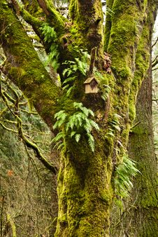 Mossy Tree In Forest With Birdhouse And Ferns Royalty Free Stock Photography