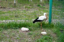 Stork Bird In Zoo Stock Photo