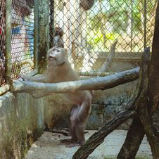 Free Monkey Sitting In A Cage Zoo Stock Image - 36573421
