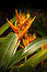 Free Heliconia Flower Stock Image - 36572261