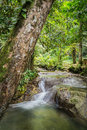 Free Water Steaming In The Jungle Royalty Free Stock Photography - 36586767