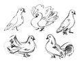 Free Dove. Hand-drawn Stock Photo - 36588180