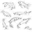 Free Aquarium Fish Stock Photography - 36588372