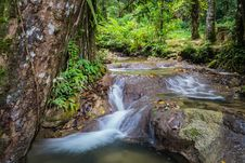 Free Water Steaming In The Jungle Stock Images - 36586534