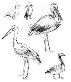 Free White Stork. Brant Goose Stock Images - 36587924