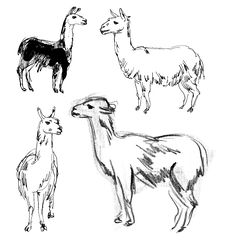 Free Lama. Hand-drawn Royalty Free Stock Images - 36588239
