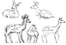 Free Sika Deer Stock Image - 36588421