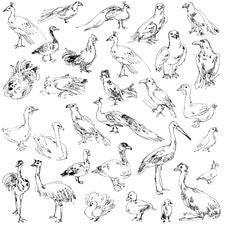 Free Wild Birds Stock Photo - 36588660