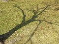 Free Summer Shadow Tree Royalty Free Stock Photos - 36596258