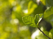 Free Green In Blur Stock Photography - 36596312