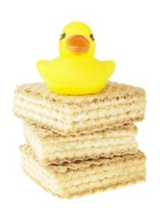 Small Duck On Wafer Stock Photo