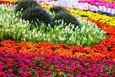 Free Colourful In The Garden Royalty Free Stock Photos - 36597558
