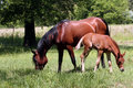 Free Mare And Foal Stock Photos - 3660393