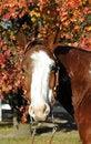 Free Horse Portrait Stock Photography - 3663962