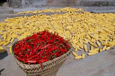 Free Corn Cobs And Peppers. Stock Photos - 3660223