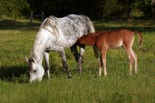Free Mare And Foal Stock Photo - 3660400