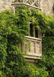 Free Vine Covered Window Stock Photos - 3660983